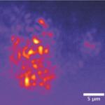 Biomimetic Random Lasers