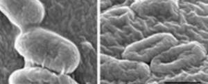 Prize PREMIO FUTURO to Valentina Palmieri for antibacterial graphene