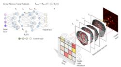 Deep learning, living, random, optical, and – maybe – useful