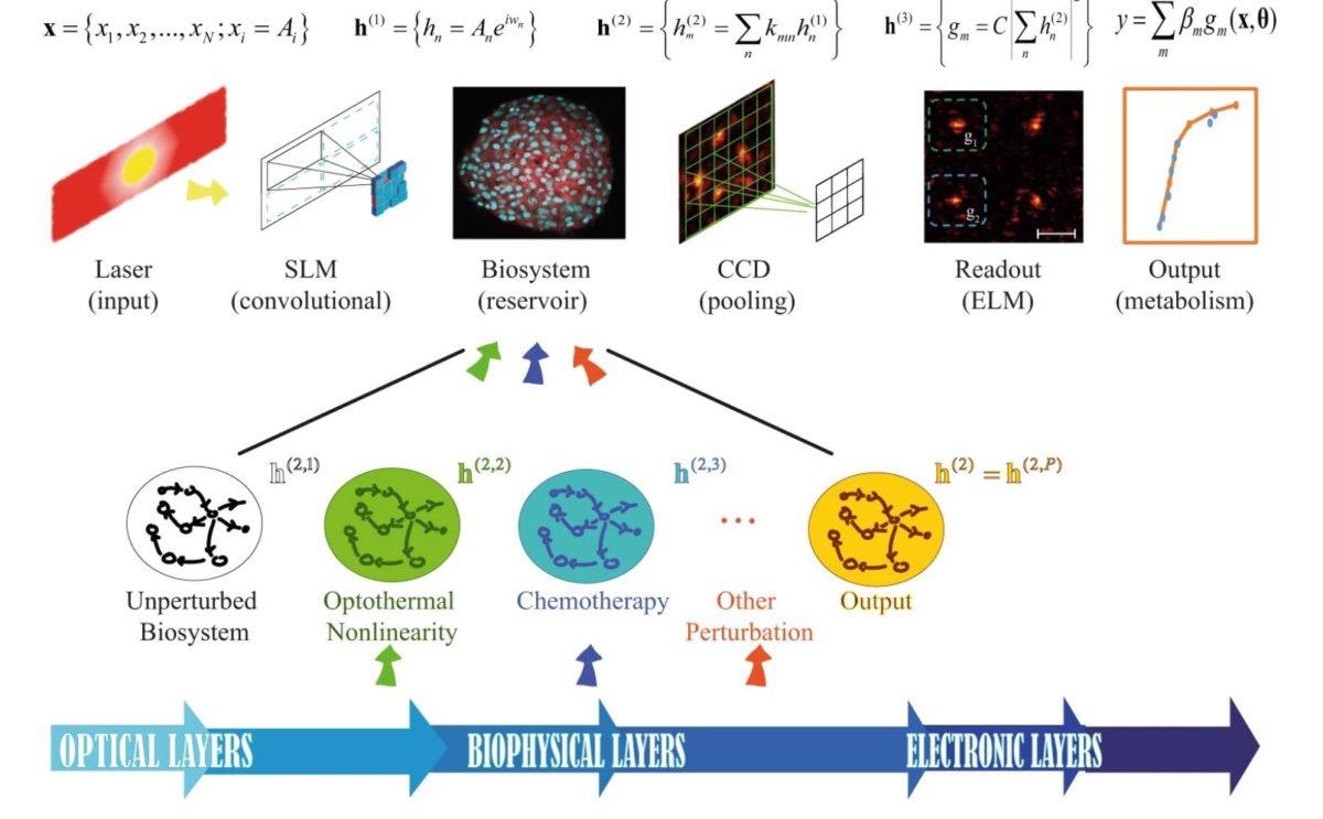 Living Random Optical Neural Network